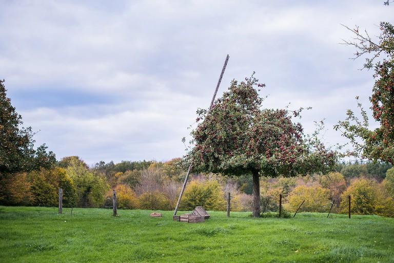 pommiers de l'avesnois séance photo dans un verger