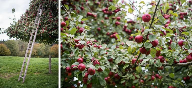 pommes à cidre de l'avesnois photographe nord